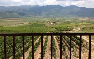 View from the tower at Villa Yustina's vineyards