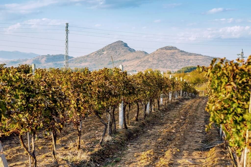 Vineyards in Melnik wine region