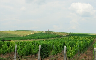 Villa Yustina's vineyards - 25 km from Plovdiv