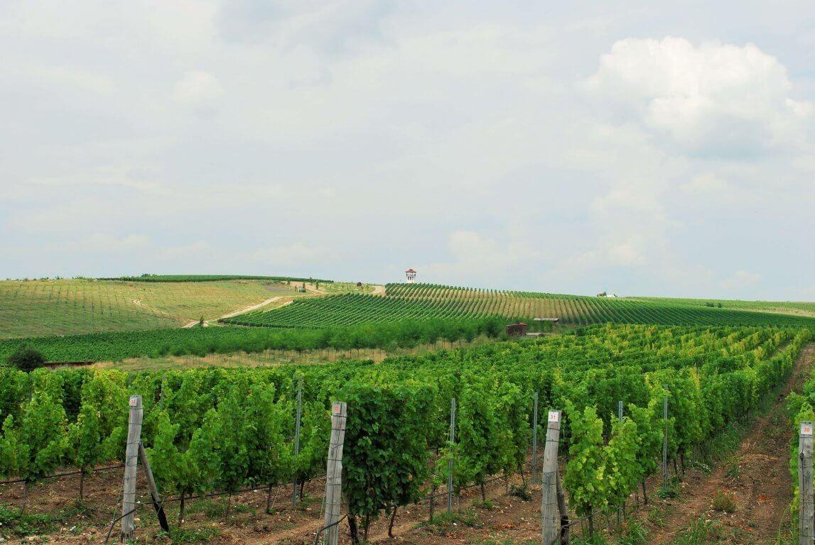 Villa Yustina Vineyards