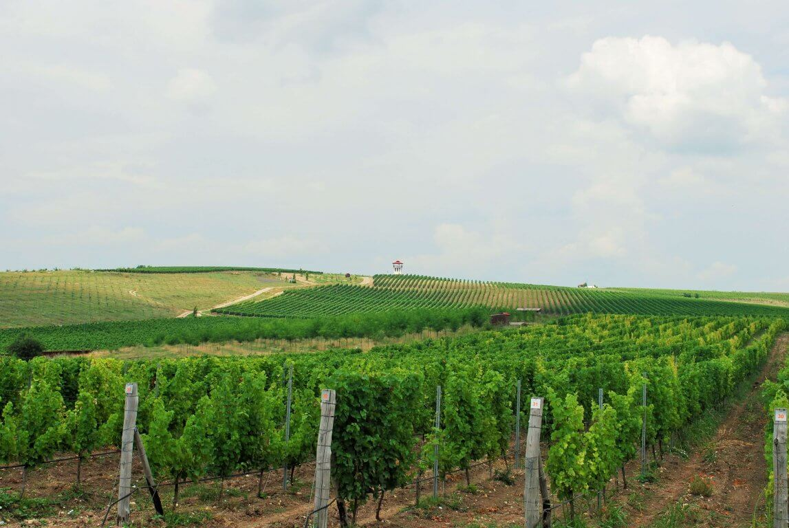 Vineyards on a one day wine tour from Plovdiv