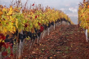 Bulgaria Wine Tours: create your own wine tour