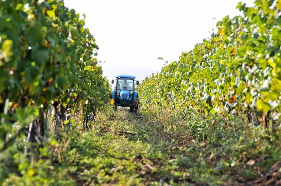 Bulgaria Wine Tours: Short Grape Escapes