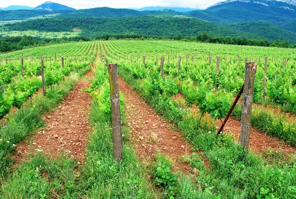 Inside of Borovitsa winery
