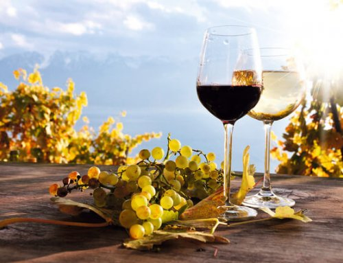 Why You Should Go on A Wine Tour