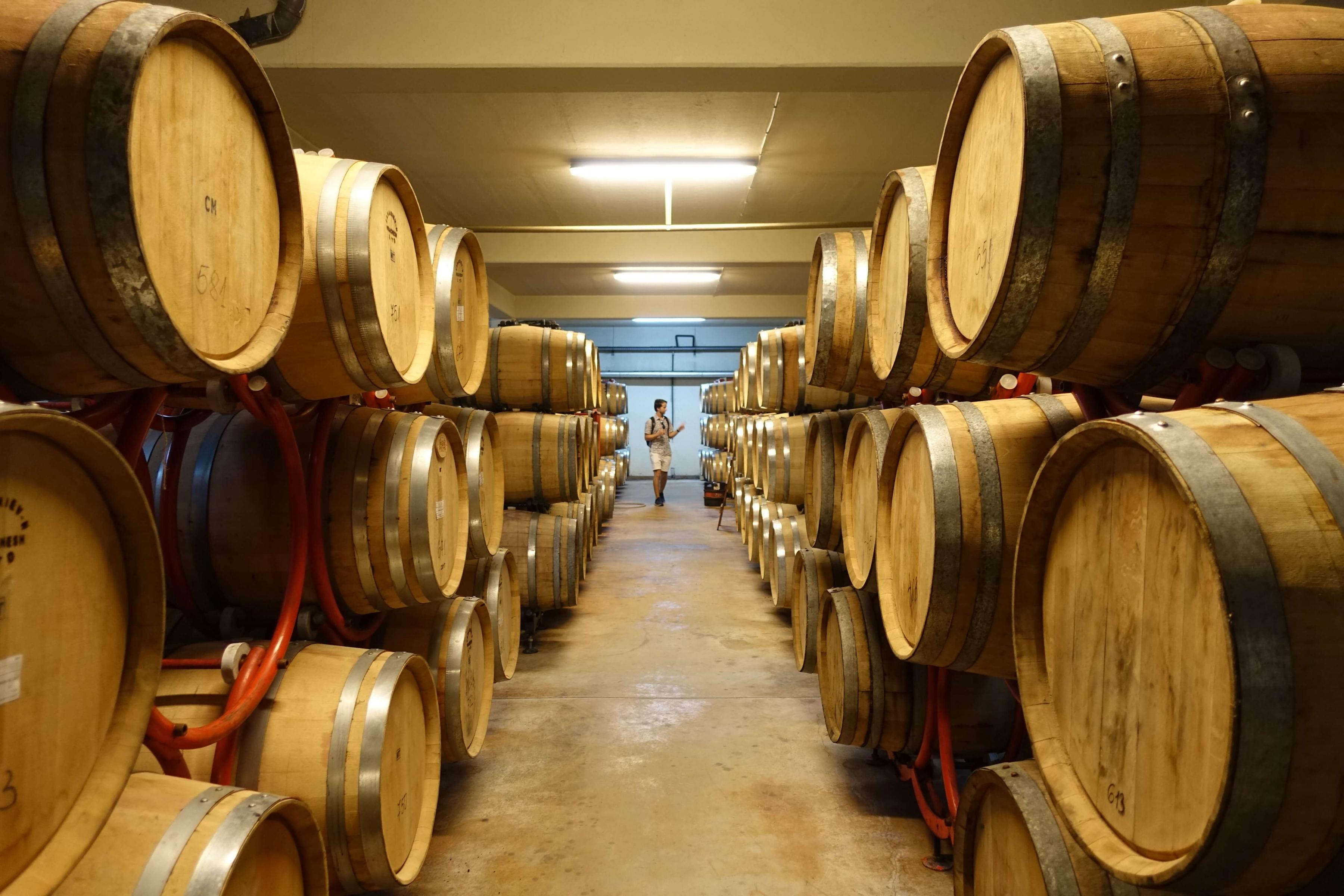Bulgaria Wine Tours: Day Wine Tour from Sofia