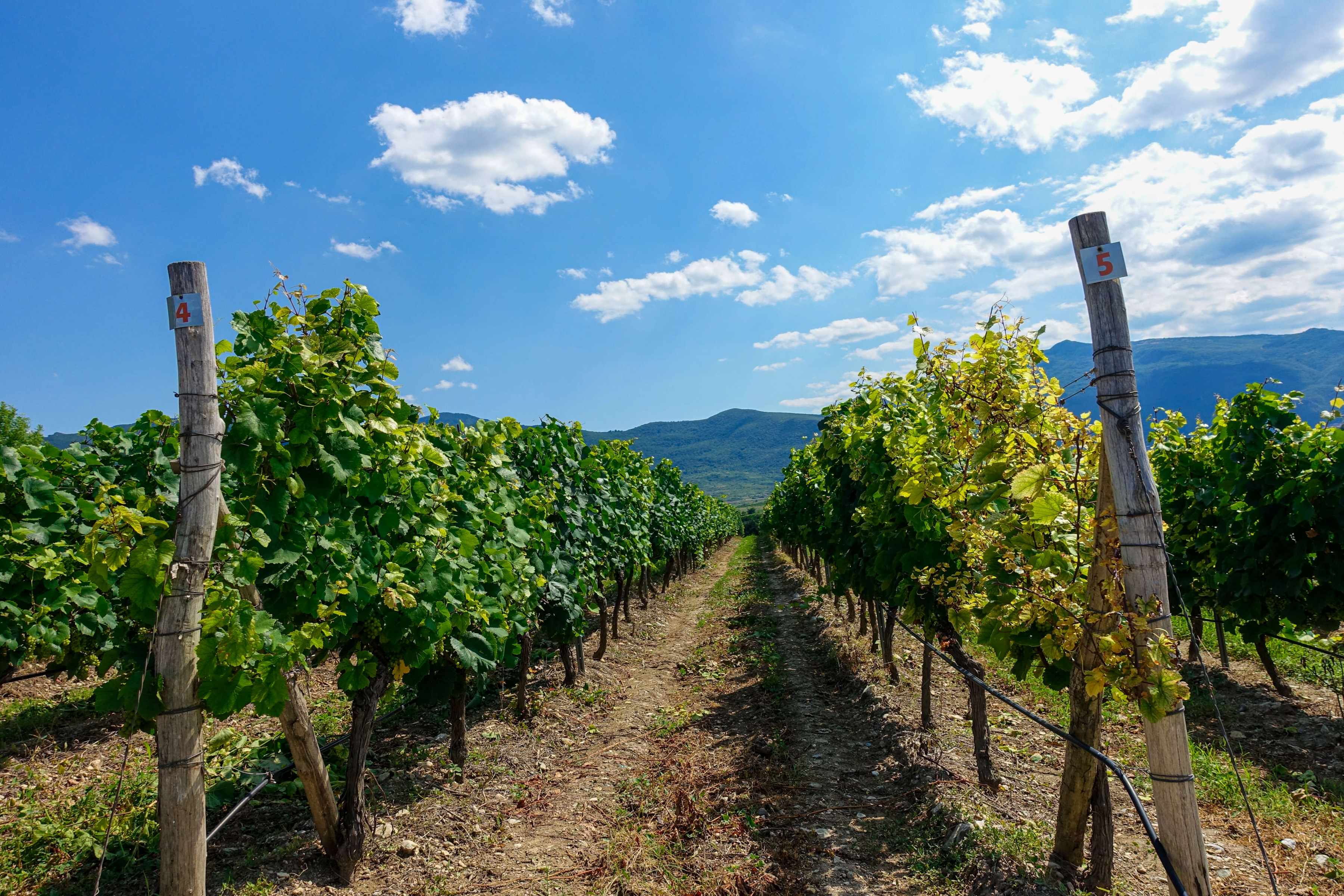 Bulgaria Wine Tours: Day Wine Tours from Plovdiv