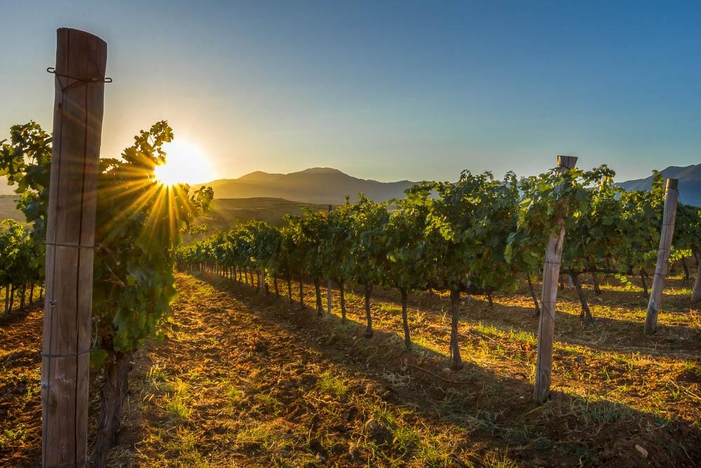 rupel winery vineyards melnik